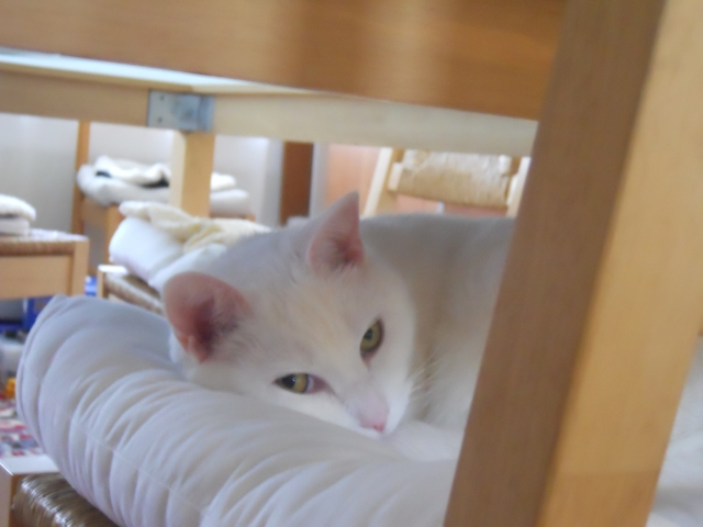 Willow-LookingOutFromChairUnderDiningTable
