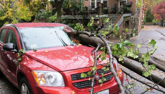tree through windshield.Oct 2015