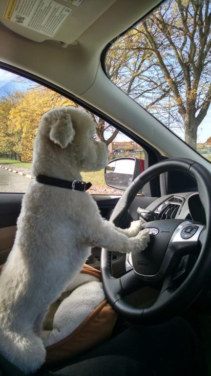 Driver dog