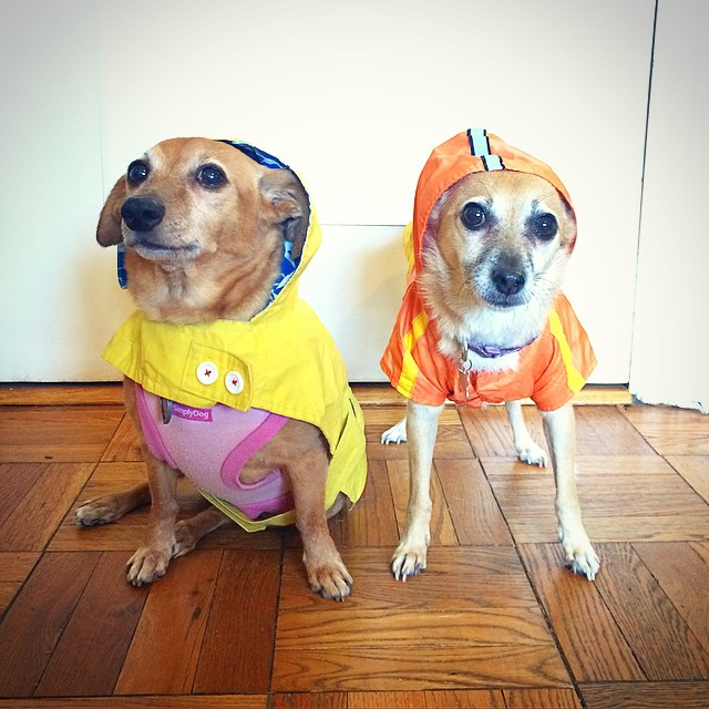 H and J in raincoats