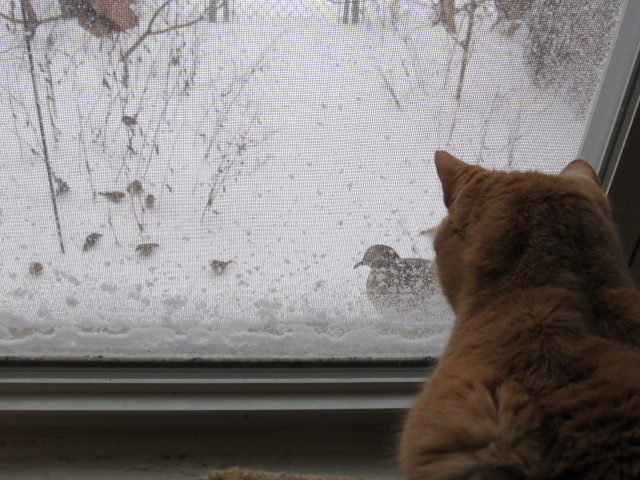 Cat watching snowbirds