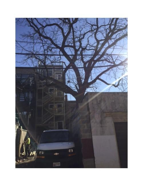 Exhibit - tree