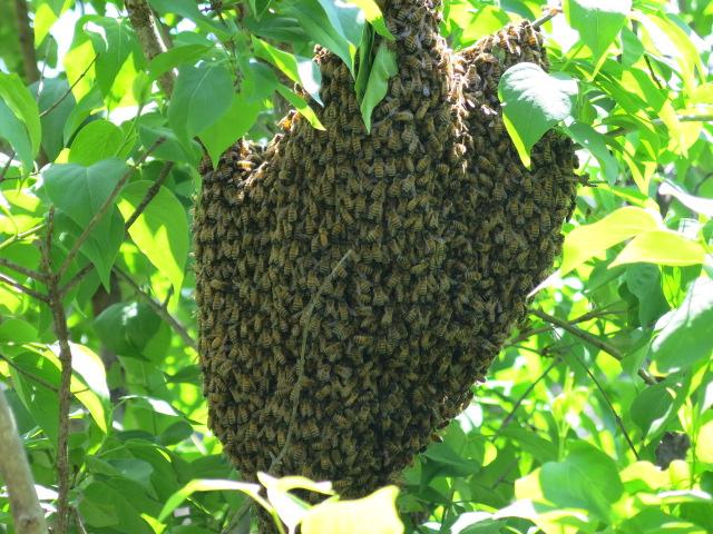 bee_swarm
