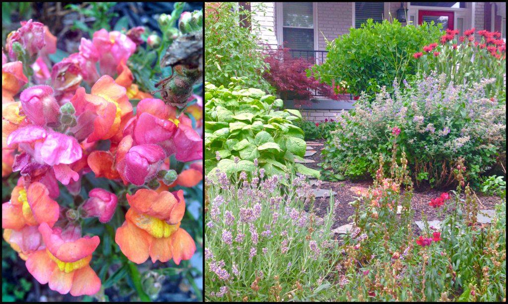 Flower Power June