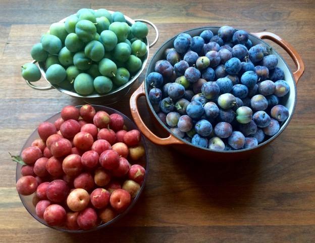 Garden plums 2016