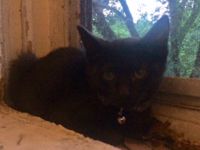missing cat popville