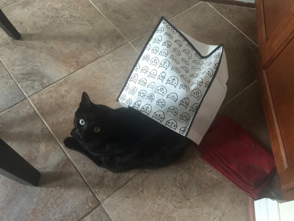 missing-cat