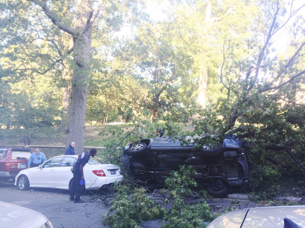 tree-down-car