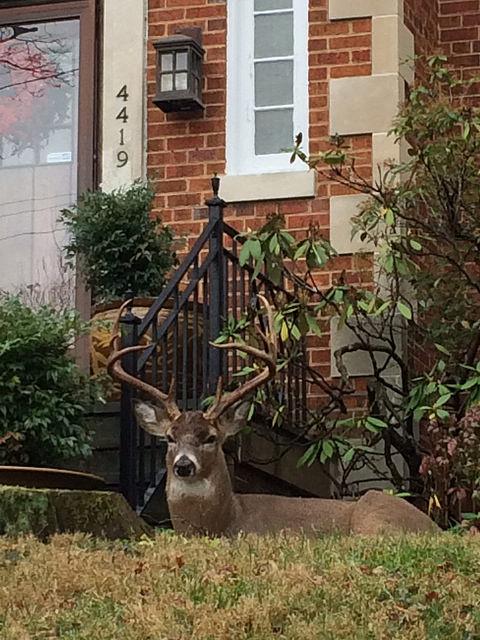 crestwood-deer
