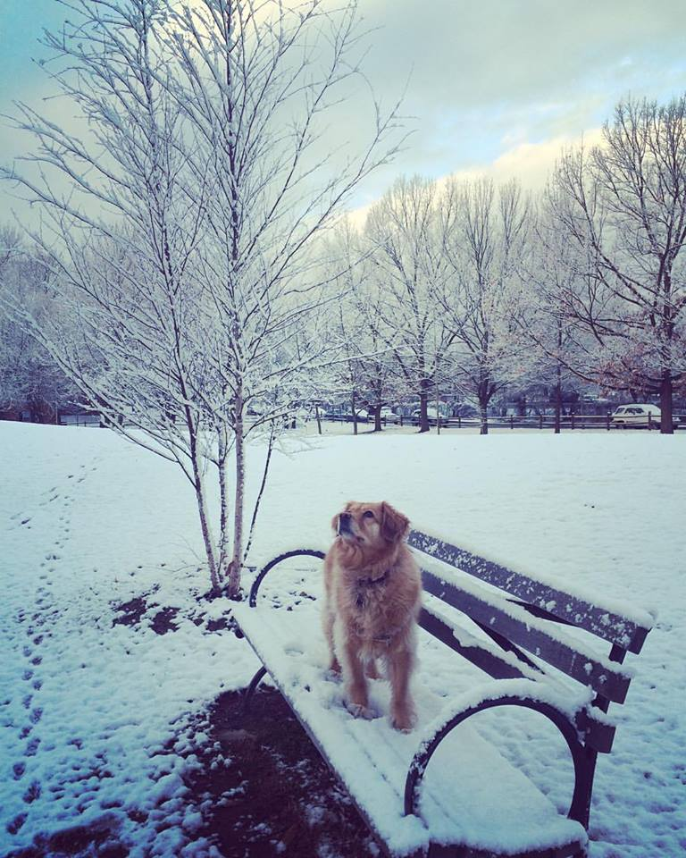 First snowfall in the district- Bailey Soliman on bench