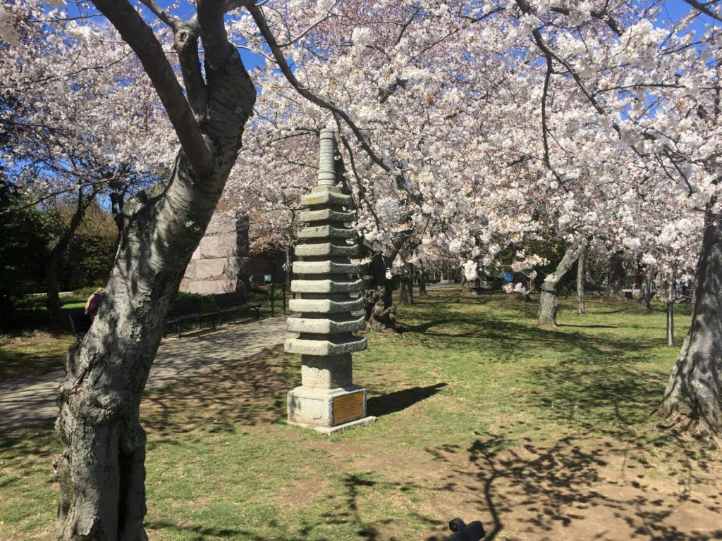 Pagoda and blossoms
