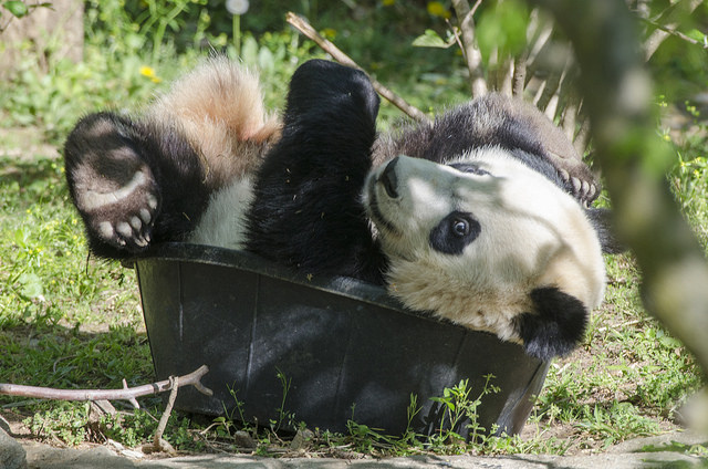 bei bei bucket