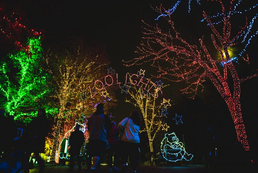 Popville 187 Zoolights Is Back Through January 1st