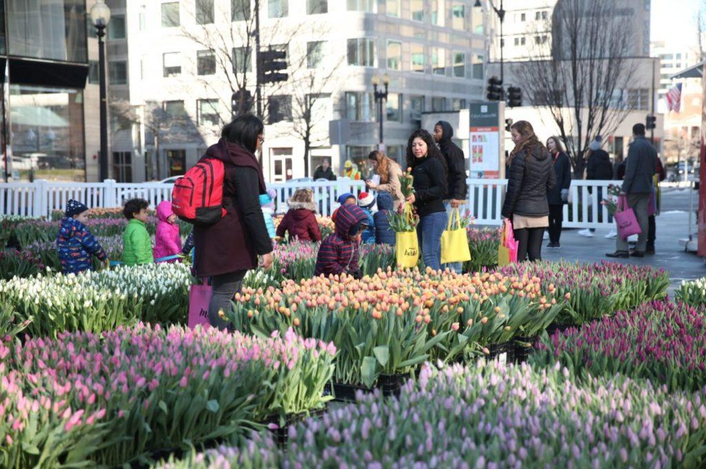 Popville Citycenterdc S Field Of Tulips Returns April 26 28