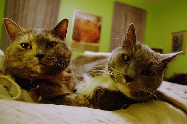 """Curious what people think–would they not buy a house if they saw two cats in it?"""