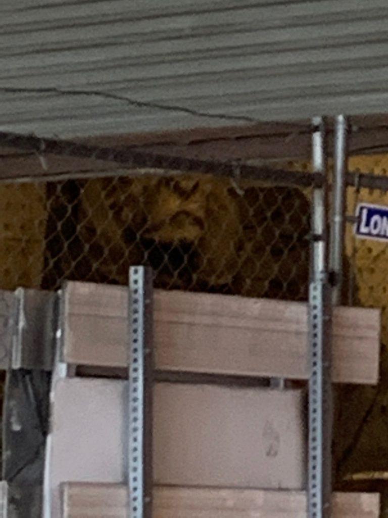 """Giant lion sculpture under 3rd Street tunnel"""