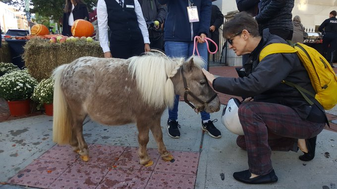 """""""there are tiny little rescue horses outside the Portrait Gallery this morning!"""""""