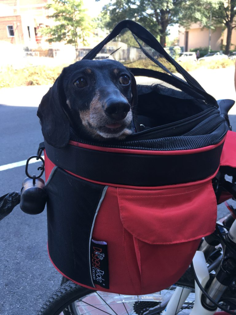 Today in Corgis in Backpacks on Metro* - A Wiener in a bag on a bike
